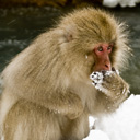 monkey-avatar.jpg
